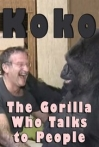 Watch Koko The Gorilla Who Talks to People Online for Free